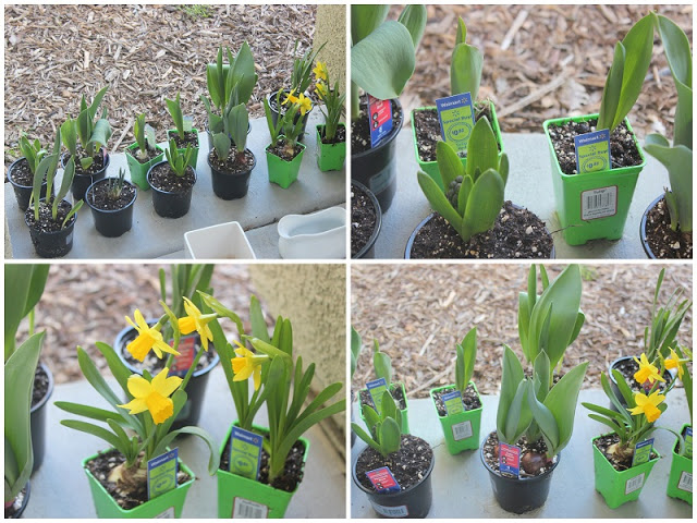 collage of bulb plants from nursery