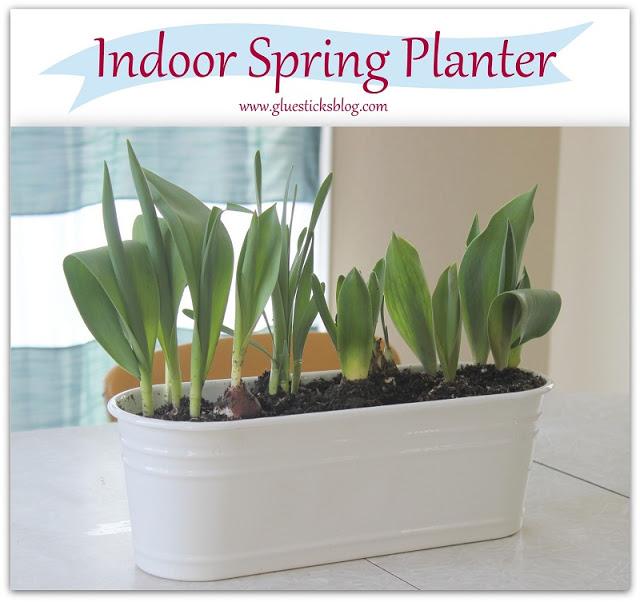 indoor bulb planter