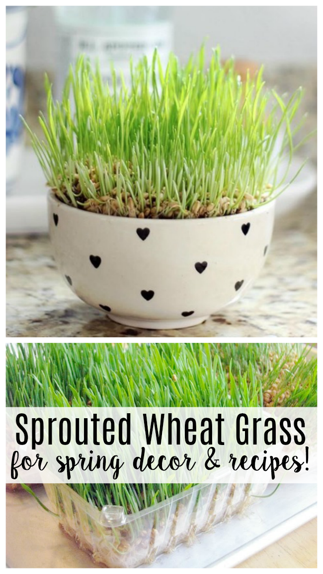 collage of sprouted grass