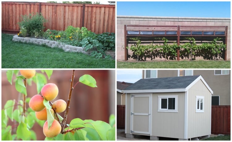 backyard projects shed and fruit trees