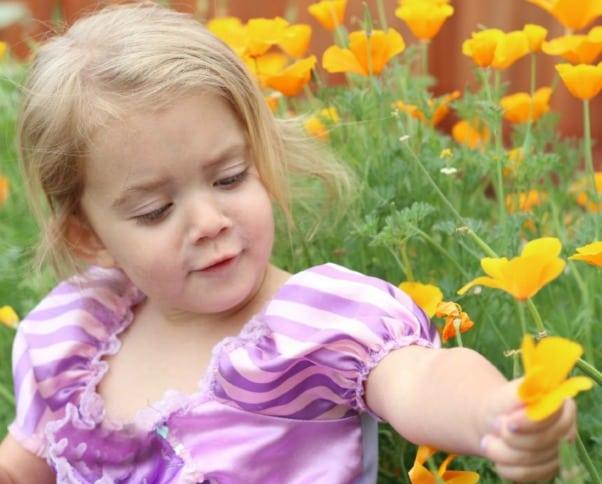 toddler next to poppies in garden