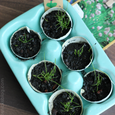seedlings inside eggshells