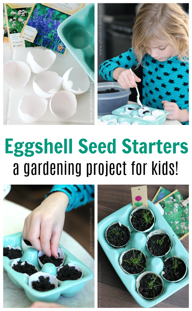 Eggshell seed starters are perfect for a kids garden!  Plant a sampling of seeds inside of eggshells and when the weather warms up plant the entire thing into your garden! A fun lesson on composting and reusing everyday products for a new purpose.