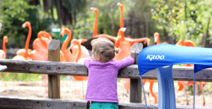 preschool zoo ideas