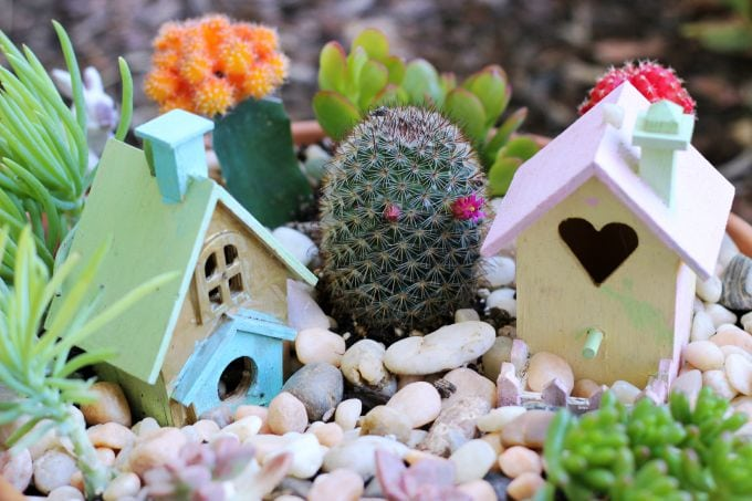 A cactus fairy garden is perfect for summer! It requires very little water, is easy to take care of, and brightens your porch all summer long!