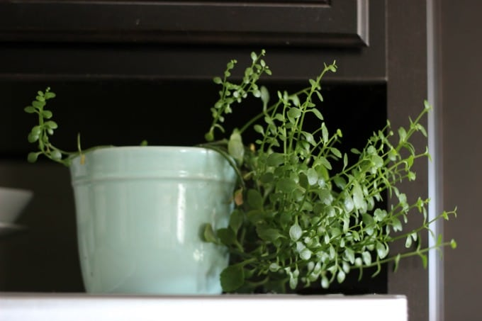 house plant tips 1
