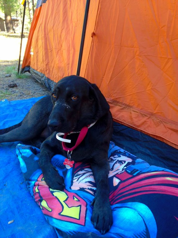 dog sleeping in tent