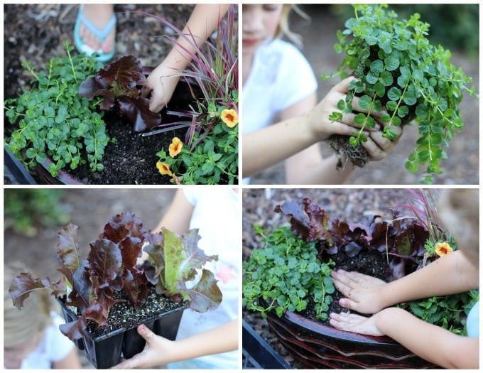 Create a beautiful fall fairy garden with the seasonal foliage of fall and a fairy garden pumpkin house!
