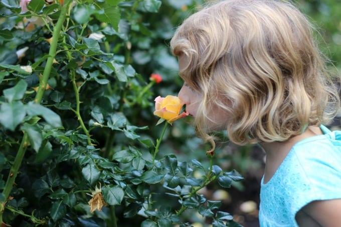 portland oregon rose garden