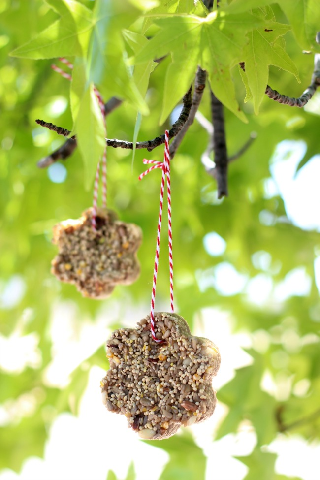 Make a bird seed feeder with only a few ingredients! Hang them in a tree and take notes on the types of birds who come along to snack on them!