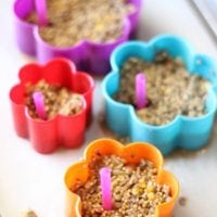 birdseed and gelatin setting up in cookie cutters