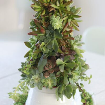 succulent tree on platter