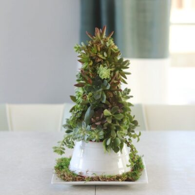 succulent christmas tree on white platter with moss
