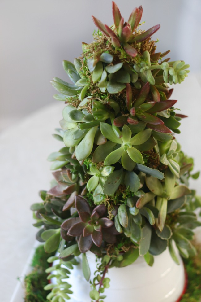 finished succulent christmas tree