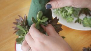 hand positioning succulent cutting onto christmas tree
