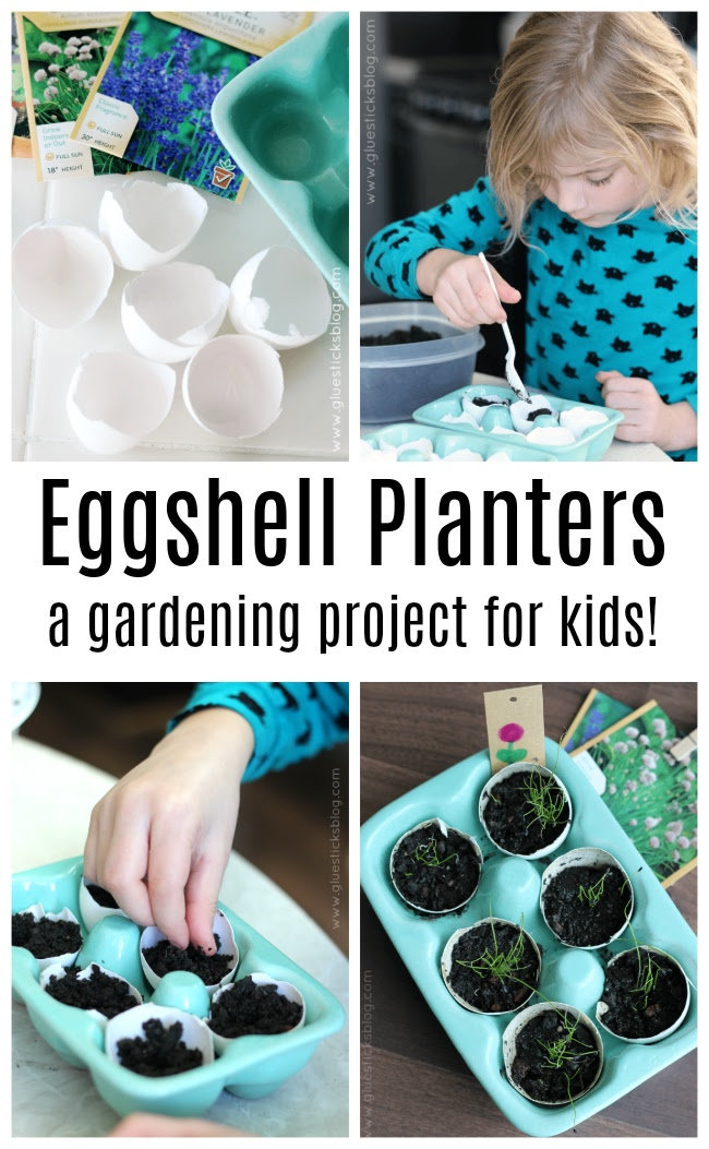 soil and seeds in eggshells